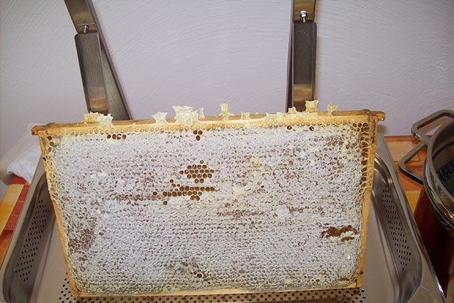 Verdeckelte, erntereife Honigwabe