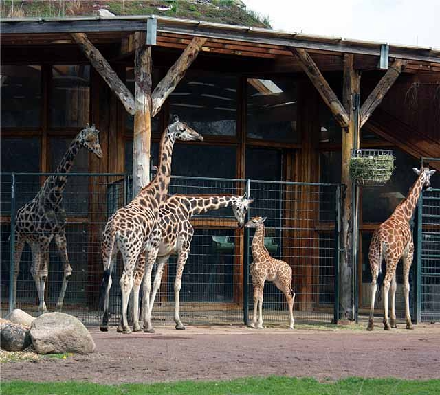 Zoo Magdeburg