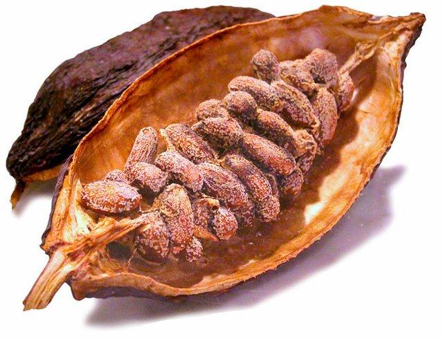 Die Samen der Kakaofrucht sind nach der Verarbeitung die Grundzutat für süße Leckerein.
