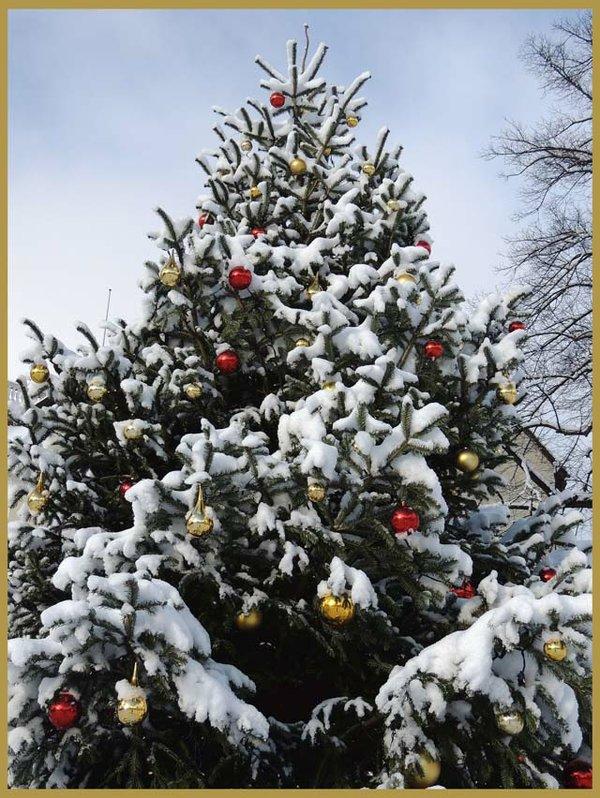 Weihnachtsbaum im Winterkleid