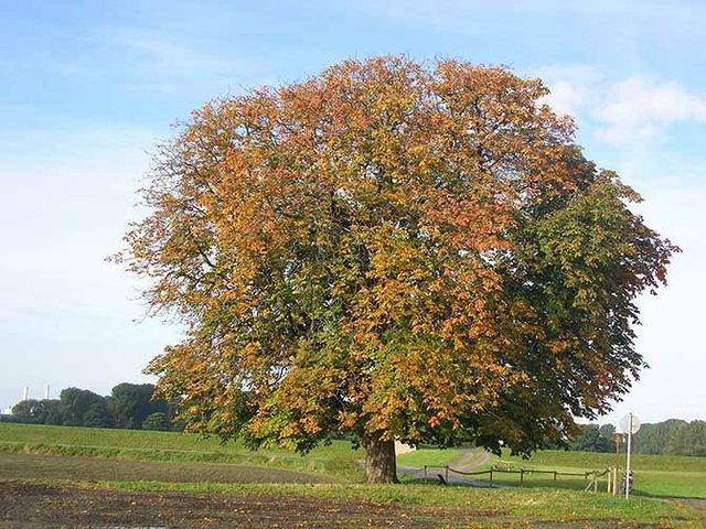 Ein Baum mit eigener Postanschrift.