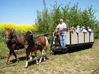 Schlanstedter Feldbahn - Pferdebahn