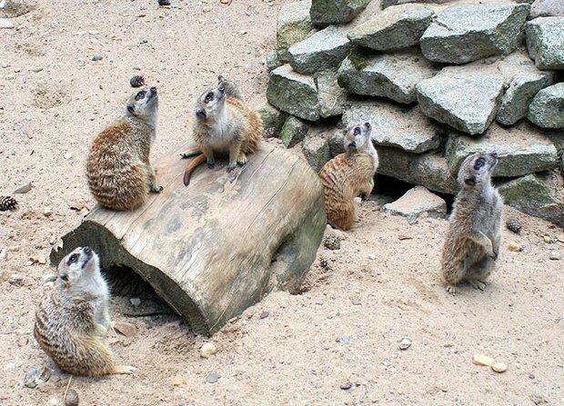 Tier- Freizeit- und Urzeitzeitpark Germendorf