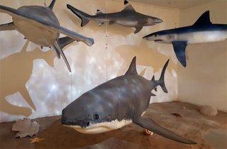 Sonderausstellung Haie