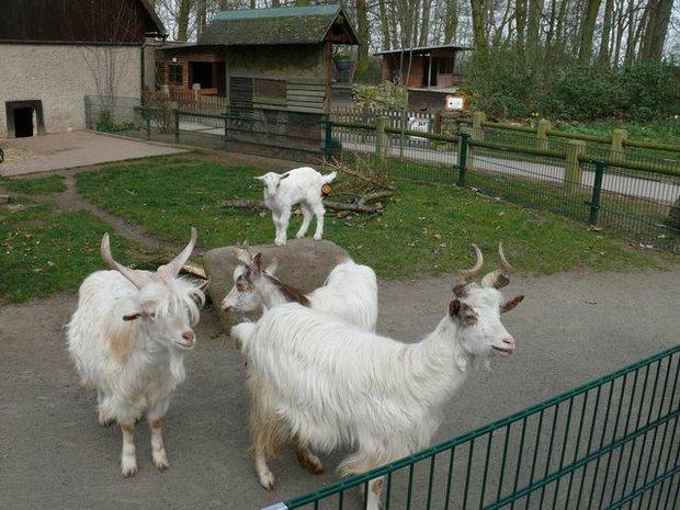 Tierpark Bierer Berg
