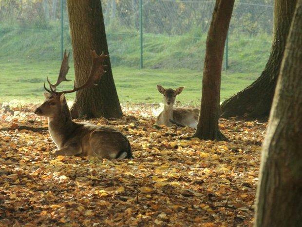 Wildpark Weißewarte