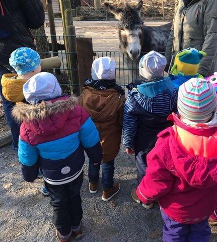 Tier-Safari zum Kindergeburtstag