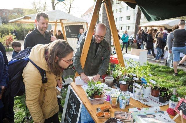 Das Pflanzenportal Smagy bietet Samen in Bioqualität