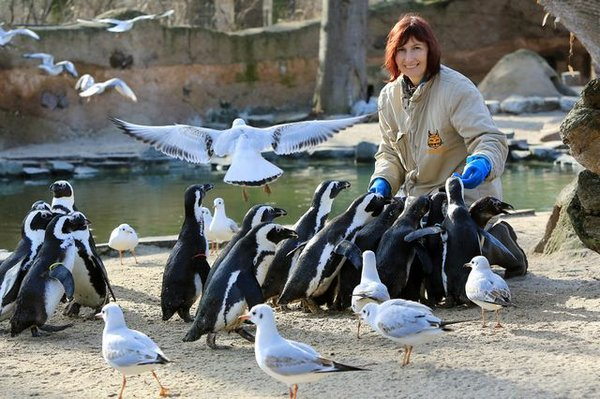 Pinguinfütterung im Zoo Magdeurg