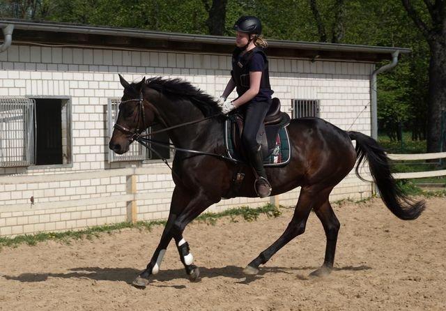 Ida und Pferd Wiki Wiki