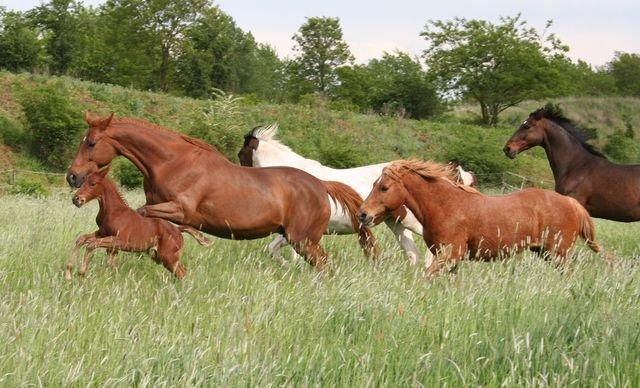 """Pferde auf den """"Koppeln am See"""""""