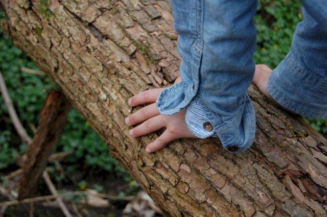 Baum erfühlen auf der Wiese