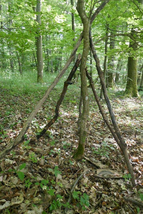 Tipi bauen im Wald