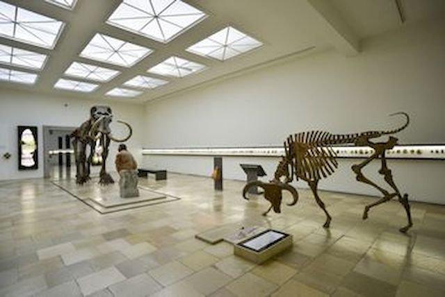 Landesmuseum für Vorgeschichte Halle