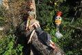 Puppen, die auf Bäume starren