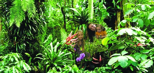 Biosphäre Potsdam Dschungel